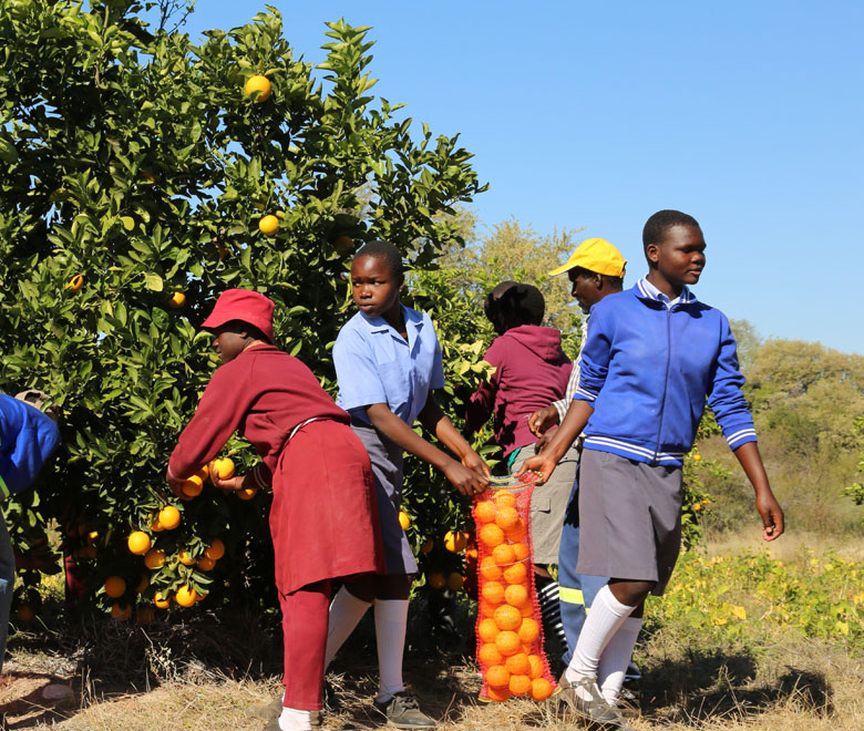 albero-arance